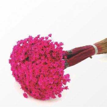 Desidratado Sempre Viva 1 Maço Pink